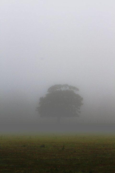 wyndtree